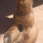 Camel Toes Pt. 2